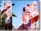 puffy-tiger-ISU